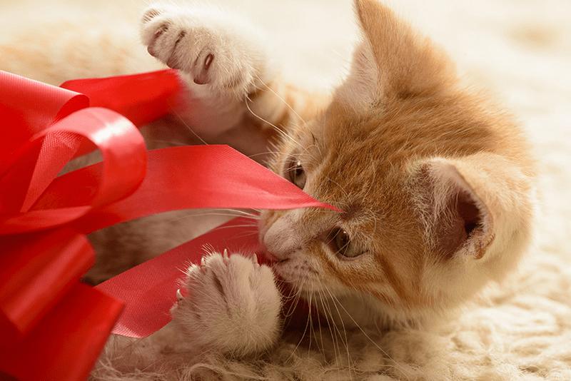 Cadeau de Noël pour chat : les meilleures idées pour le gâter !