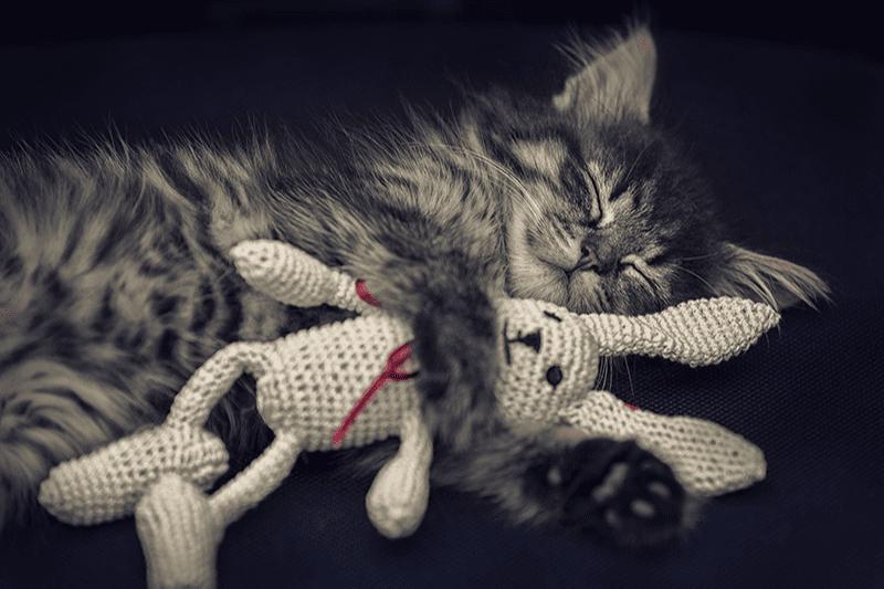 Meilleur jouet pour chat : conseils et idées pour bien choisir