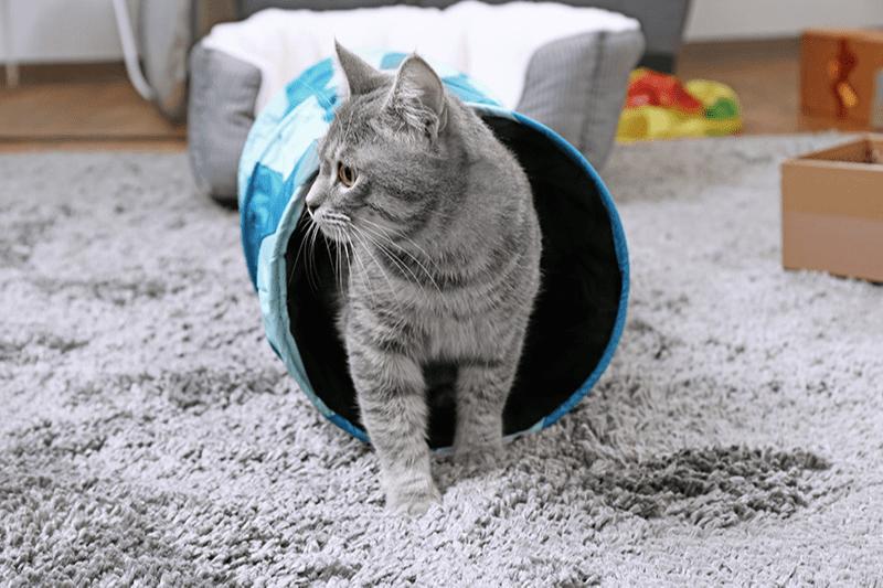 Un parcours pour chat à la maison pour matou casse-cou !