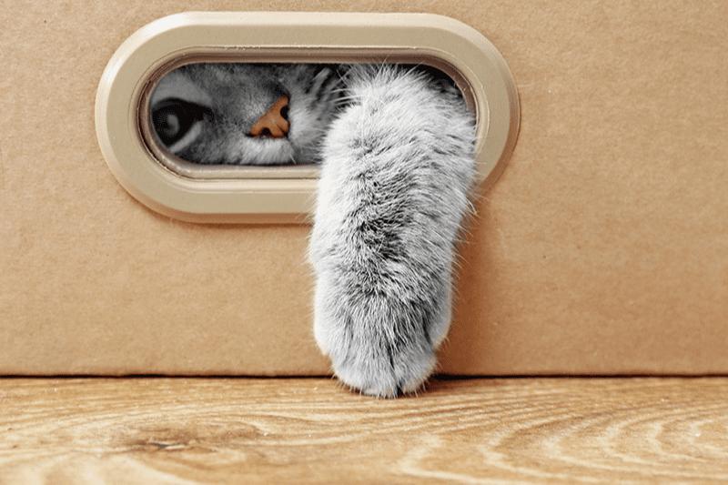 Cachette pour chat : pourquoi et comment ?