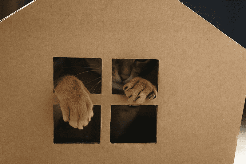 Maison en carton pour chat : les DIY les plus simples à réaliser