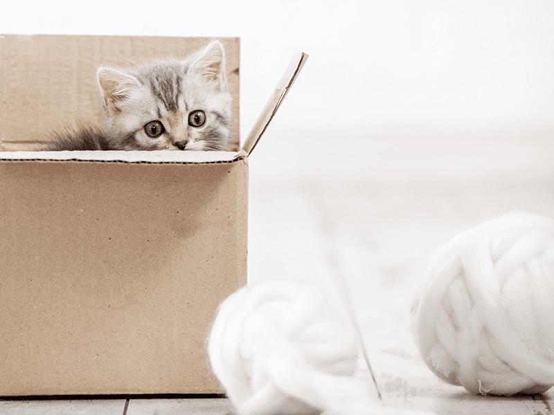 Jouet pour chaton à fabriquer soi-même : idées et conseils