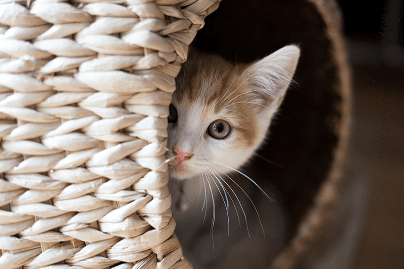 Maison pour chat d'intérieur : quelle maisonnette pour faire plaisir à votre petit félin ?
