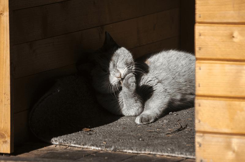 La maison pour chat d'extérieur : intérêts et critères de choix
