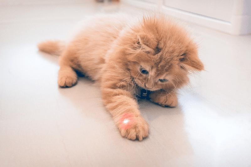 Laser pour chat : bénéfices et mode d'emploi de ce jeu incontournable !