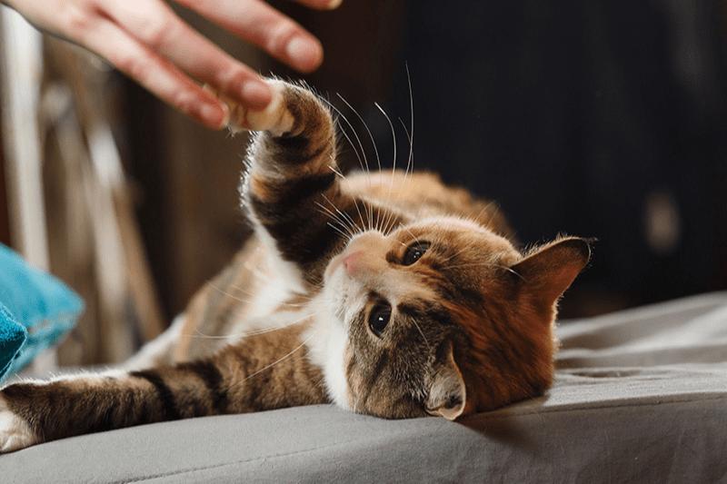 Jouer avec son chat : combien de temps par jour ?