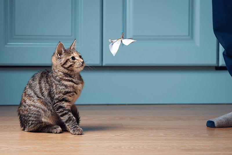 Le jouet papillon, votre chat en raffole !