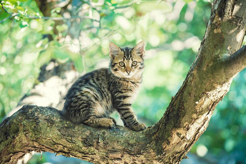 Comment faire rentrer un chat ? Idées d'appâts et astuces !