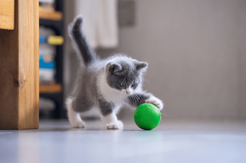 Jouet pour chat d'appartement : l'essentiel pour le matou d'intérieur