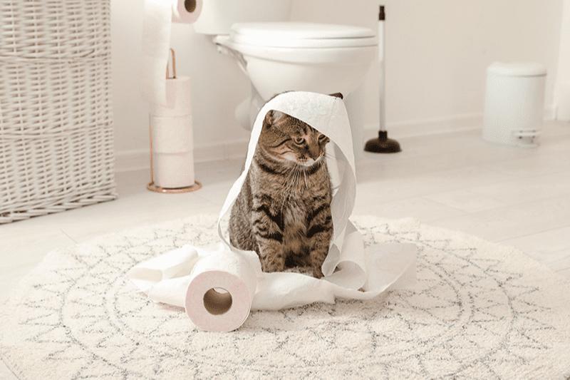 Jeux pour chat à faire soi-même : idées et astuces de longues heures de divertissement !
