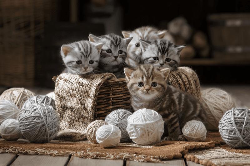 Jouer avec son chaton : mode d'emploi et idées pour s'amuser à 2 !