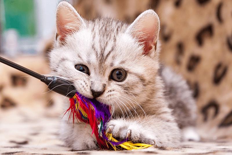 Jouet plumeau pour chat : des plumes et des grelots pour vous amuser à deux !