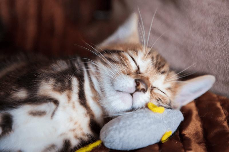 Souris pour chat : une multitude de jouets délirants !
