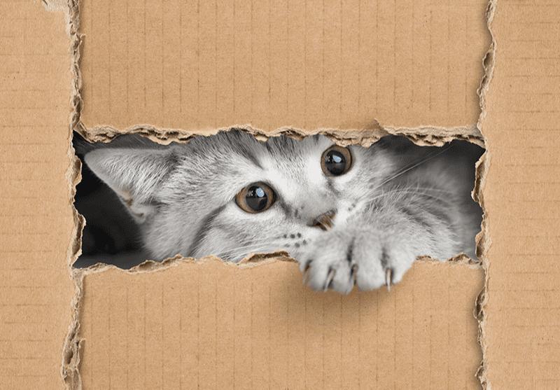 Comment amuser son chat ? Idées d'activités et de jouets