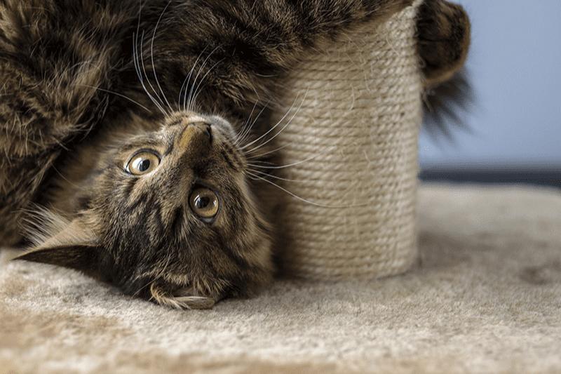 Arbre à chat avec tunnel : comment choisir l'aire de jeu de votre matou ?