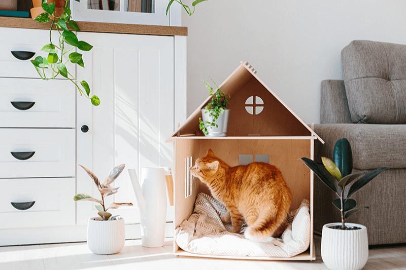 Maison pour chat à faire soi-même : des idées à moindre coût pour toutes vos envies