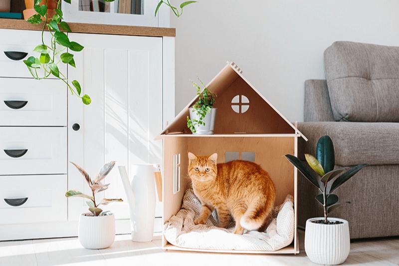 Maison pour chat : quel modèle choisir ?