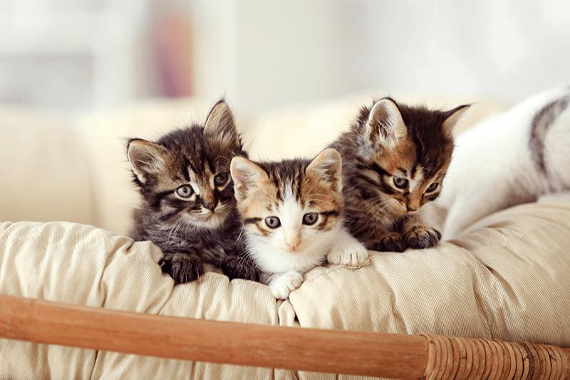 Pourquoi les jeux sont-ils importants pour l'apprentissage des chatons