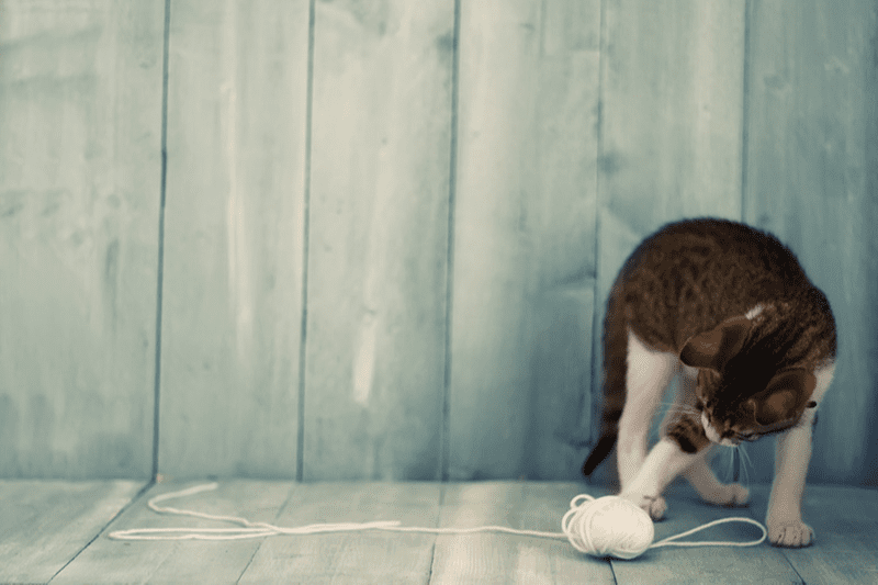 Balle pour chat : bien choisir cet indispensable jouet pour chats !