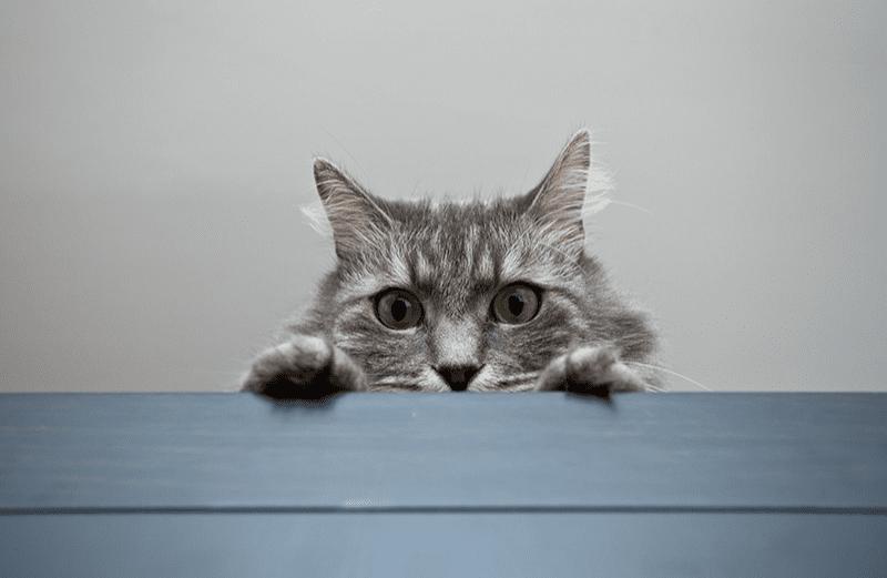 Parcours pour chat d'appartement : rendez votre matou heureux !