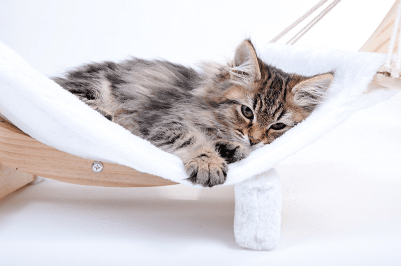 Hamac pour chat : l'espace détente idéal <br/> pour votre matou