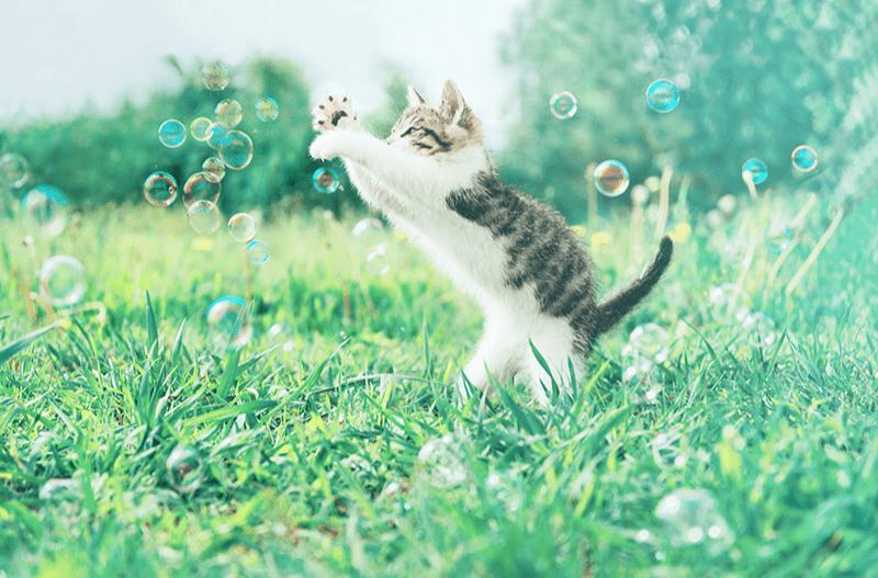 Stimuler son chat : astuces à l'usage du maître attentionné !