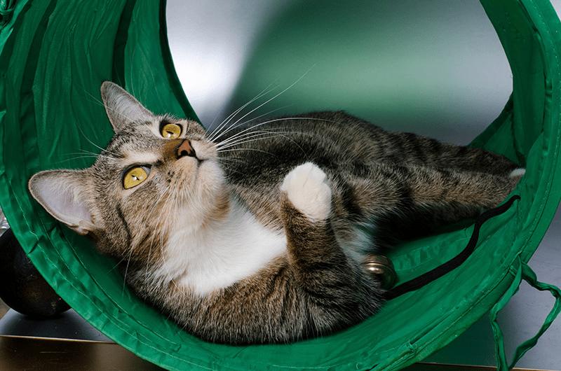 Tunnel pour chat et parcours d'aventure : les meilleures idées de jeu !