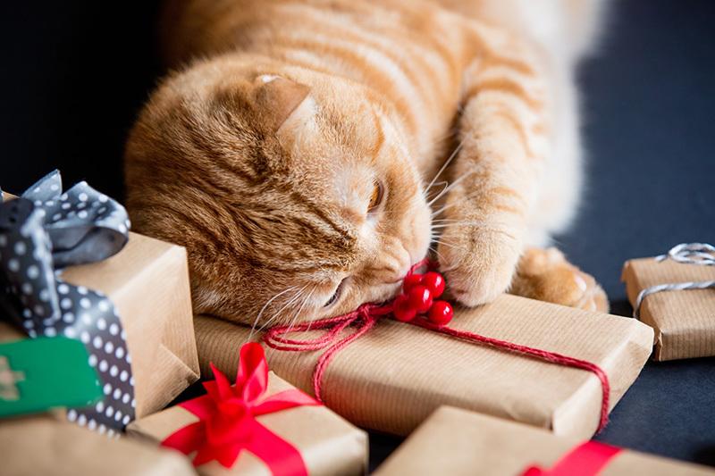 Idées de cadeau pour chat   Les produits