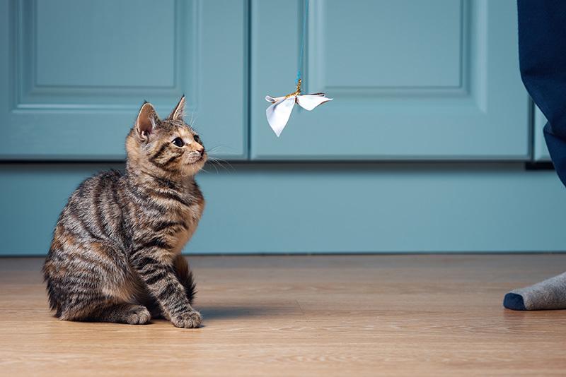 jouet mouche que tu colle au fenêtre pour chat