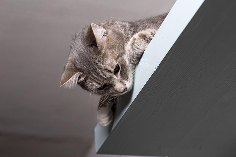 parcours pour chat d appartement des installations. Black Bedroom Furniture Sets. Home Design Ideas