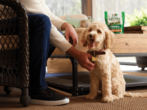 3 Tips for Better Dog Oral Care