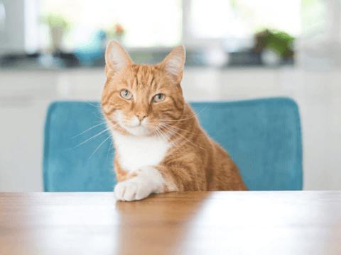 People Foods Aren't Cat Treats
