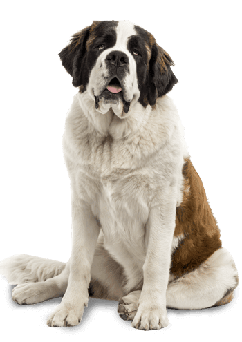 Large Breed Senior Dry Dog Food