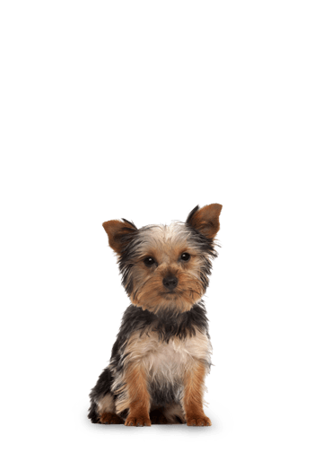 Small Breed Puppy Dry Dog Food