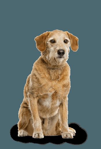 Nourriture sèche pour chiens âgés