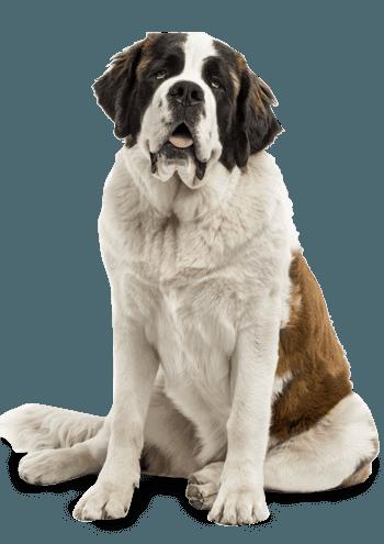 Small Bites Adult Dry Dog Food