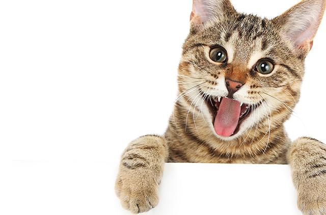¿TIENES PERRO... Y GATO? ¡LLEGA NUTRO CAT!