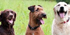 Pedigree® Hunderassen und deren Charaktereigenschaften
