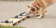 Pedigree® Intelligenzspielzeug: Gehirnjogging für Hunde