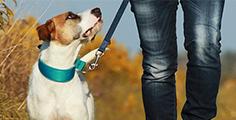 Pedigree® Clickertraining mit dem Hund: So macht das Training Spaß!