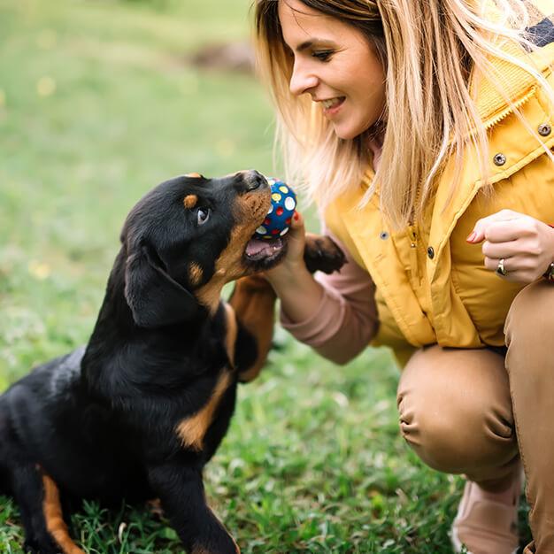 Hund spielt mit etwas und Besitzer ist sichtbar