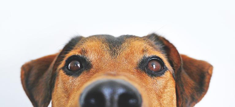 Können Sie Fakten und Fiktion unterscheiden, wenn es um Hunde in Tierheimen geht?