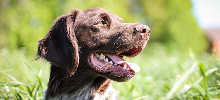 Ihr neuer Hund aus dem Tierheim: die ersten Tage