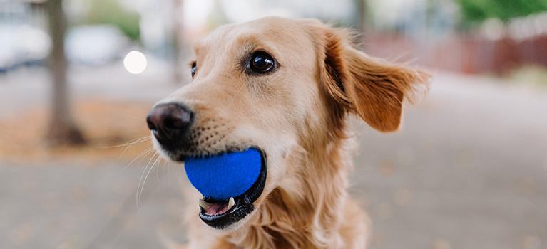 Eduquer un chien adulte : tous nos conseils et astuces