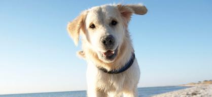 10 comportements canins décryptés