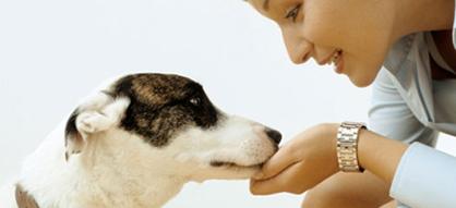 L′arrivée du chien : les bons réflexes