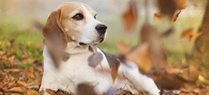 L′automne, des tracas pour les chiens