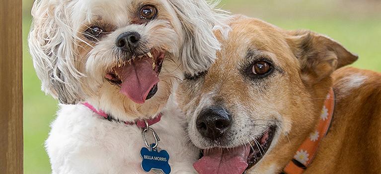 Adopter un chien: quelles sont les démarches à effectuer?