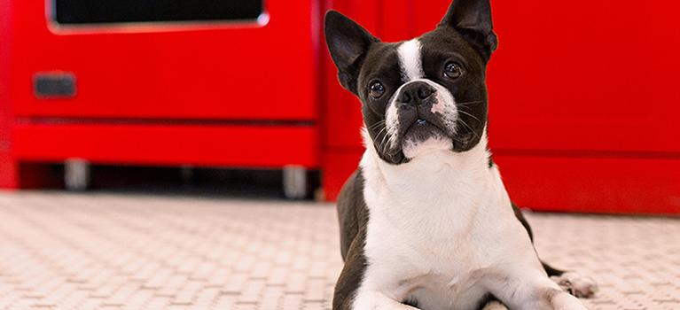 Comment réussir les premiers jours avec votre chien?
