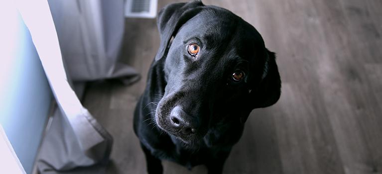Sommeil du chien : un élément essentiel au bien-être de l'animal